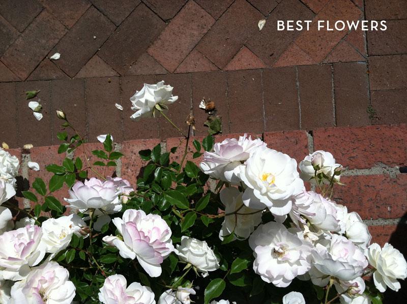 09-2012-flowers-solvang