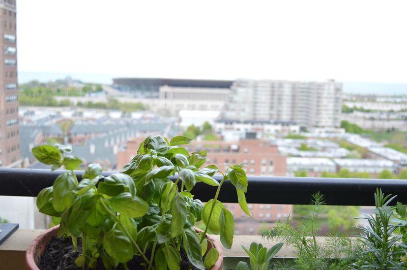 Urban-gardening-03
