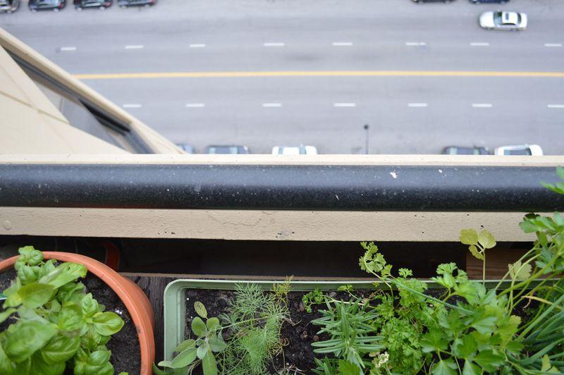 Urban-gardening-02